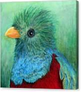 Quetzal Eye'n You Canvas Print