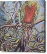 Quetzal On A Limb Canvas Print