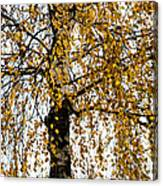 Quiet Charm Of Autumn Canvas Print