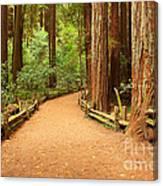 Quiet Forest Canvas Print