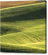 Quiet Morning In The Palouse  Canvas Print