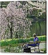 Quiet Time Among The Cherry Blossoms Canvas Print
