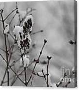 Quiet Winter Canvas Print