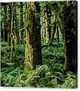 Quinault Rainforest Canvas Print