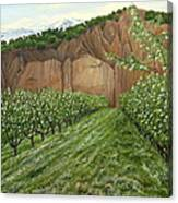 Quince Trees Canvas Print