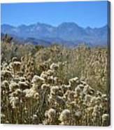 Rabbit Brush Owens Valley Canvas Print