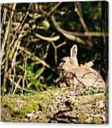 Rabbit In The Woods Canvas Print