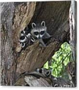 Raccoon Family Time Canvas Print