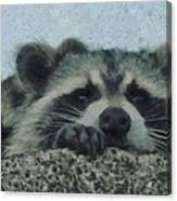Raccoons Painterly Canvas Print