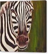 Racer, Zebra Canvas Print