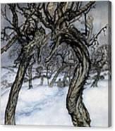 Rackham: Whisper Trees Canvas Print