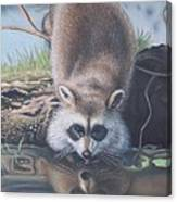 Racoon Reflections Canvas Print