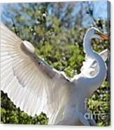 Radiant Great Egret Canvas Print