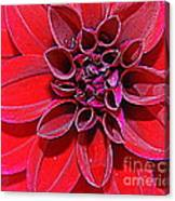 Radiant In Red - Dahlia Canvas Print