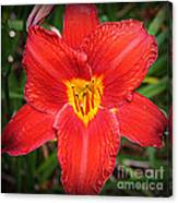 Radiant In Red - Daylily Canvas Print