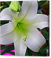 Radiant In White - Lily Canvas Print