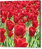Radiant Red Canvas Print