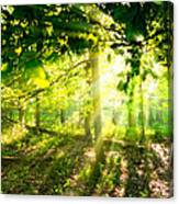 Radiant Sunlight Through The Trees Canvas Print