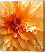 Radiating Orange Dahlia Canvas Print