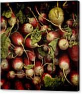 Flemish Radish Art Canvas Print