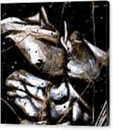 Rafael - Study No. 1 Canvas Print