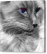 Ragdoll In Black And White Canvas Print