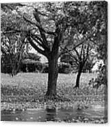 Rain And Leaf Ave In Black And White Canvas Print