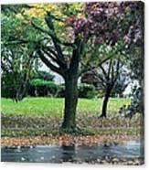 Rain And Leaf Ave Canvas Print