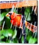 Rain Bird Canvas Print