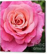 Rain Drenched Rose Canvas Print
