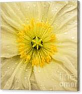Rain Drenched Yellow Poppy Canvas Print