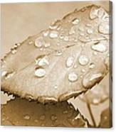 Rain Drops Canvas Print