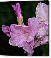 Rain Flower 1 Lavender Canvas Print