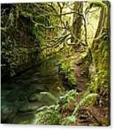 Rain Forest 2 Canvas Print