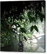 Rain Forest Overhang Canvas Print