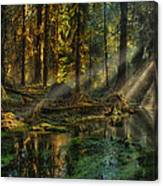 Rain Forest Sunbeams Canvas Print