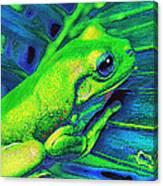 Rain Forest Tree Frog Canvas Print