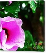 Rain Kissed Flower Canvas Print