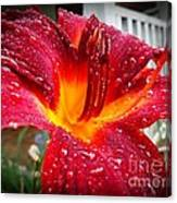 Rain Kissed Lilly Profile 1 Canvas Print