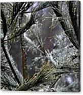 Rain On Pine Needles Canvas Print