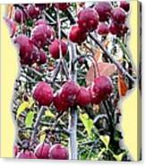 Rain On The Crab Apples Canvas Print