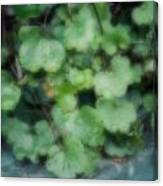 Rain On The Ivy Canvas Print