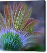 Rain Petals Canvas Print