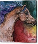 Rainbow Arabian Canvas Print