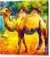 Rainbow Camel Canvas Print