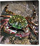 Rainbow Crab Canvas Print