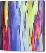 Rainbow Eucalyptus 2 Canvas Print