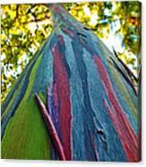 Rainbow Eucalyptus Canvas Print