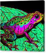 Rainbow Frog 3 Canvas Print