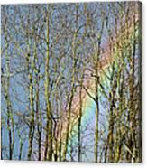 Rainbow Hiding Behind The Trees Canvas Print